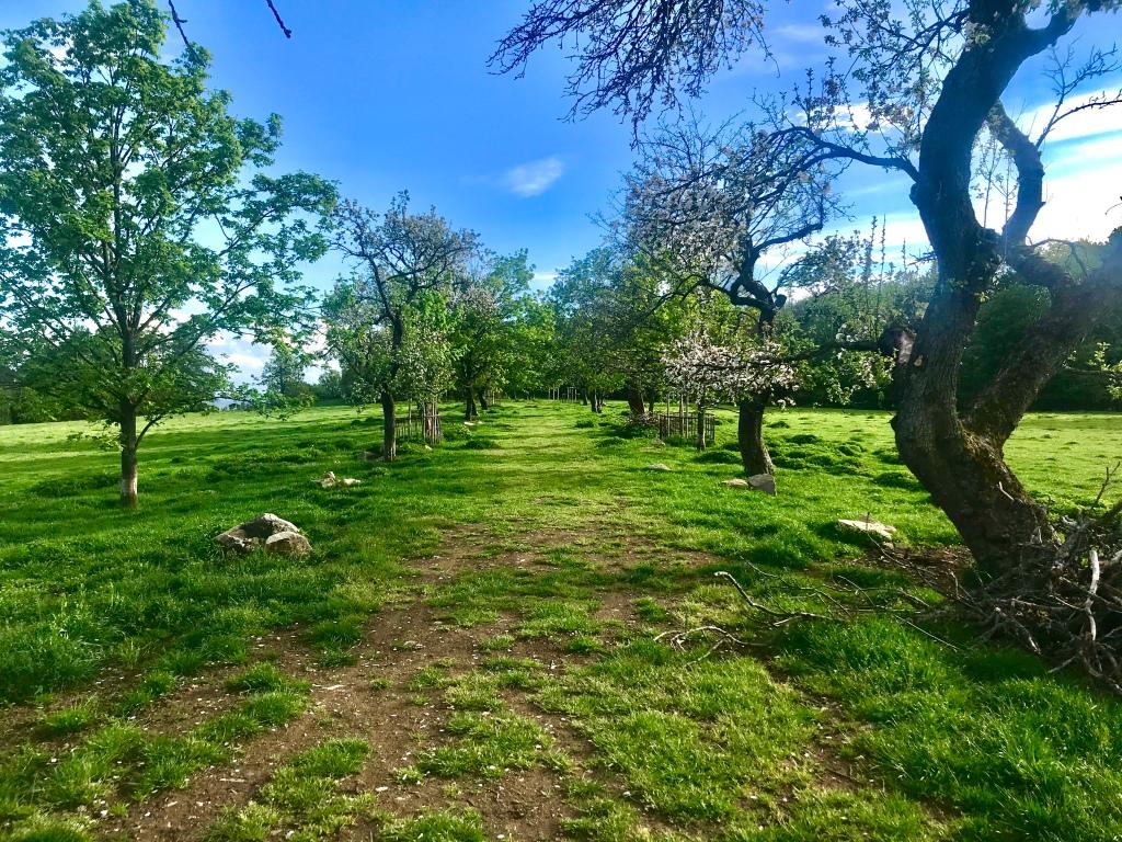 Myšlínské pastviny